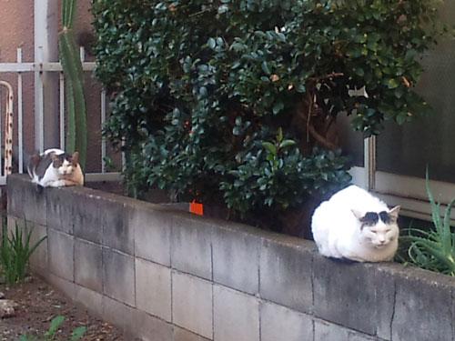 猫 中分け