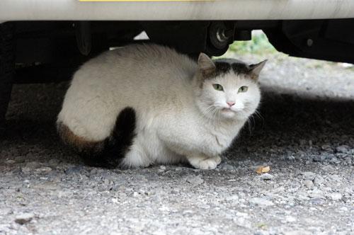 用賀 駐車場 猫