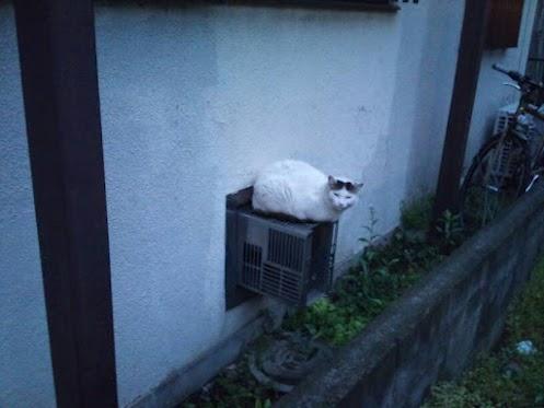 中分け 猫 駐車場