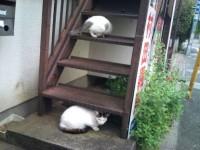 用賀 猫 駐車場