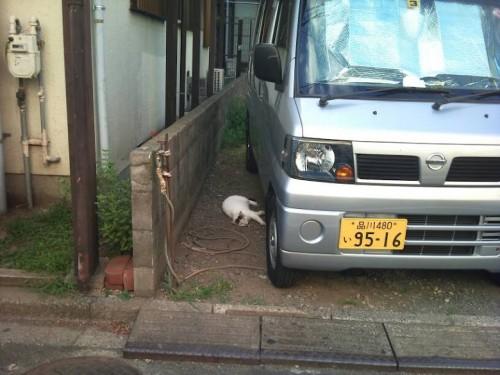 中わけ 猫