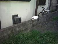 用賀 猫 駐車場 中分け