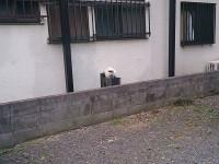 駐車場 猫