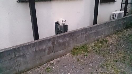 中分け 猫 用賀