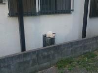 中分け 用賀 猫