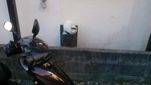 ナカワケ 猫