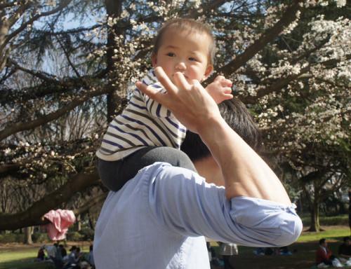 砧公園 桜 花見