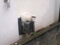 中分け 猫